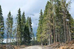 """""""Dealul Berbecului"""", drum forestier calamitat, ar urma să fie refăcut de Direcţia Silvică cu peste 3 mil. lei"""