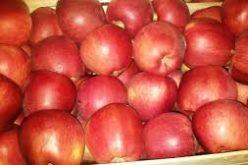 4,2 mil. lei, pentru furnizarea de mere copiilor în următorii trei ani şcolari