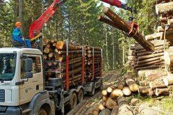 Firma cu cea mai mare cifră de afaceri rezultată din exploatarea forestieră este din județul Alba, iar cu cel mai mare profit net este dintr-un județ invecinat